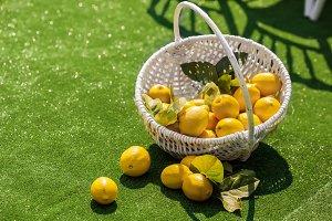 Bright composition of lemons in basket