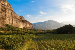 Beautiful grape vineyard before sunset with mountain in Greece