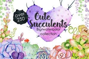 Succulents & Cactuses