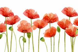 Watercolor Flowers, Poppies