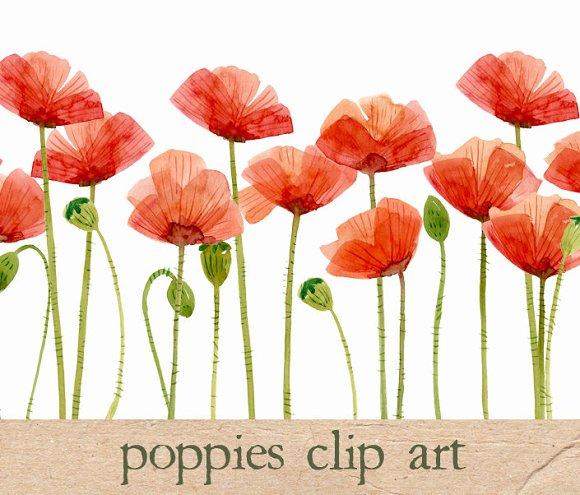 Watercolor Flowers, Poppies