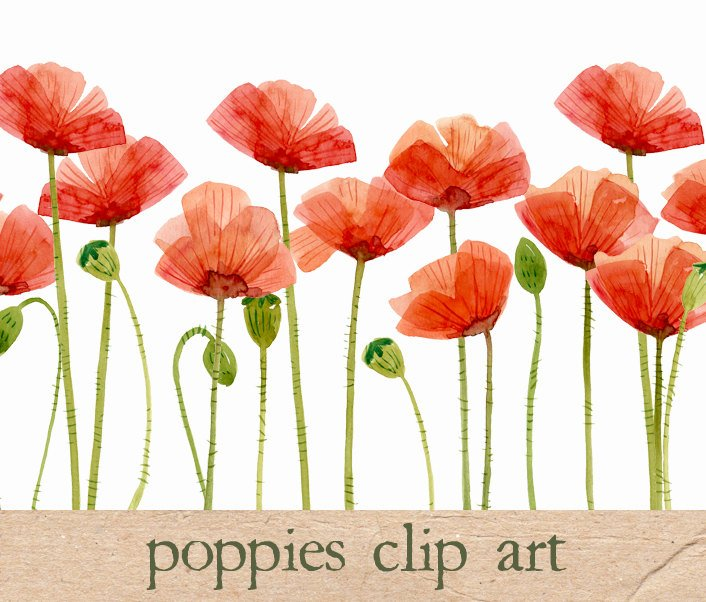 Watercolor flowers poppies illustrations creative market pro watercolor flowers poppies mightylinksfo