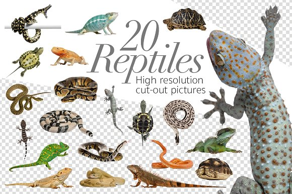 20 Reptiles - Cut-out Pictu-Graphicriver中文最全的素材分享平台