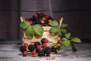 basket with blackberries