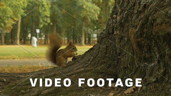 Squirrel Eats Apple In The Park Slowmotion 96 Fps