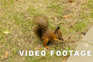 Squirrel eats the Nuts in the Park and run away