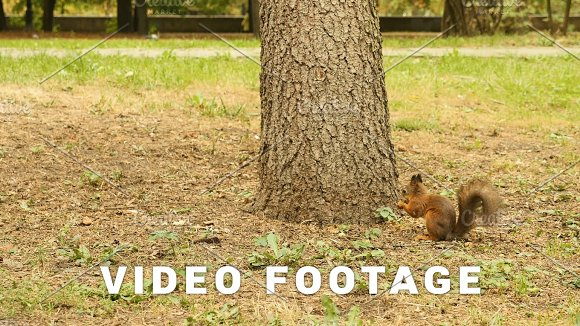 Squirrel Finds The Food In The Park