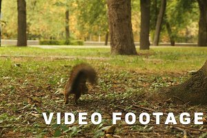 Squirrel hides the Food in the Park