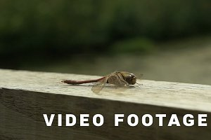 Dragonfly on the Bridge - slowmotion