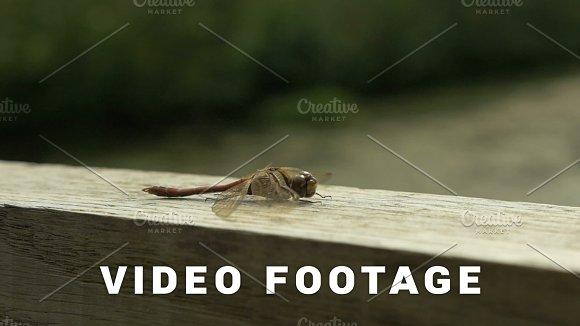 Dragonfly On The Bridge Slowmotion