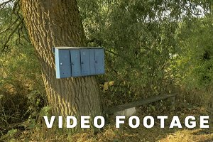 Mailboxes on a tree in a Russian village