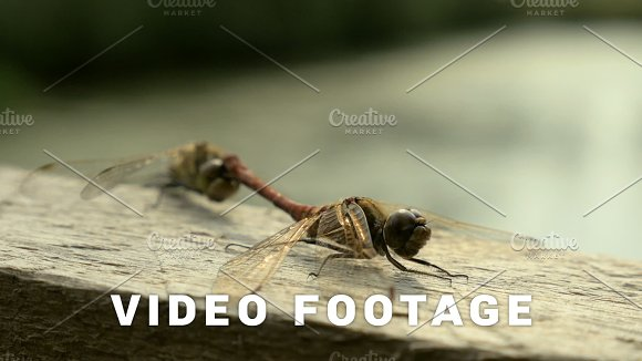 Dragonfly Reproduction In The National Reserve