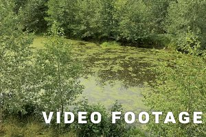 Swamp in the national wildlife reserve. Autumn daytime. Smooth dolly shot