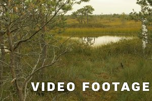 Pond in the national wildlife reserve. Autumn daytime. Smooth dolly shot