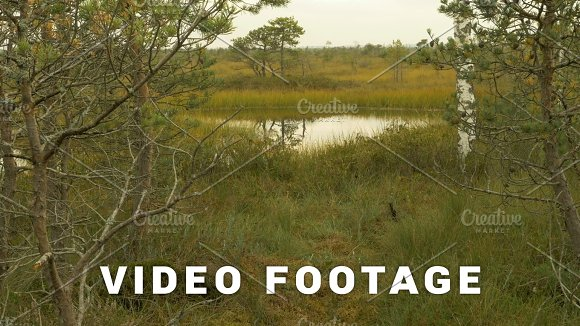 Pond In The National Wildlife Reserve Autumn Daytime Smooth Dolly Shot