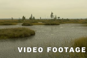 Island in the swamp of the wildlife reserve. Autumn daytime. Smooth dolly shot