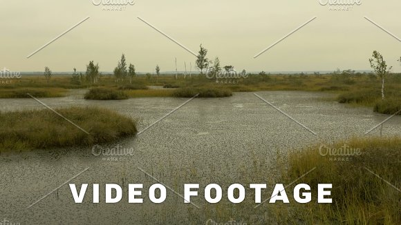 Island In The Swamp Of The Wildlife Reserve Autumn Daytime Smooth Dolly Shot