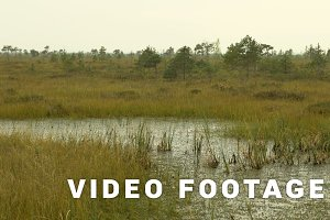 Water plant in the national swamp reserve. Autumn daytime. Smooth dolly shot