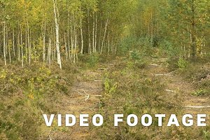 Wild road in the national wildlife reserve. Autumn daytime. Smooth dolly shot