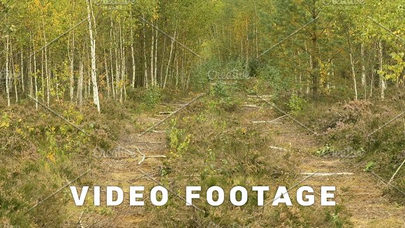 Wild Road In The National Wildlife Reserve Autumn Daytime Smooth Dolly Shot