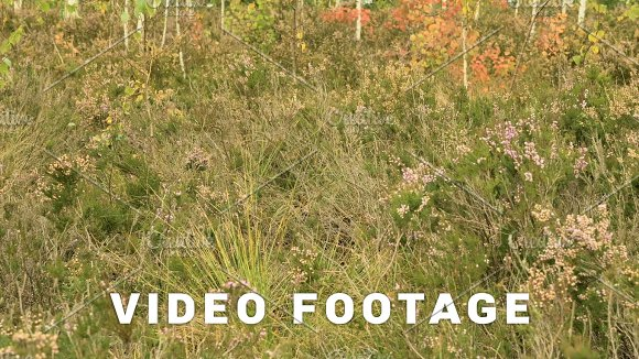 Wild Flowers In The National Swamp Reserve Autumn Daytime Smooth Dolly Shot
