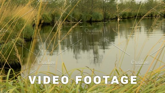 Pond In The Forest Autumn Daytime Smooth Dolly Shot