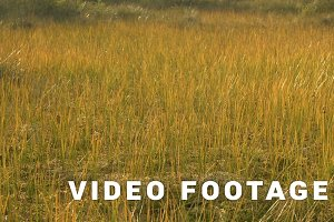 Gold grass on the national swamp reserve. Autumn daytime. Smooth dolly shot