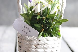 Spring sale hand-written tag and Bouquet of snowdrops in a wicker basket. Vintage Retro Or Rustic Style.