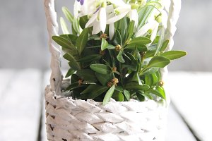 Hello spring, hand-written tag and Bouquet of snowdrops in a wicker basket. Vintage Retro Or Rustic Style.