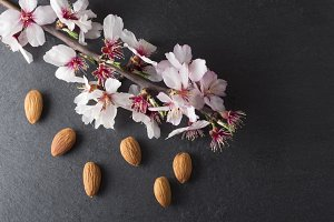 Almond blossoms and dried almonds