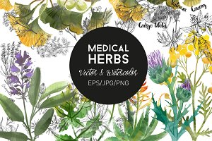 Medical Herbs. Vector & watercolor