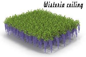 Wisteria ceiling