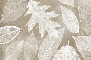 White Leaf Skeleton Overlays