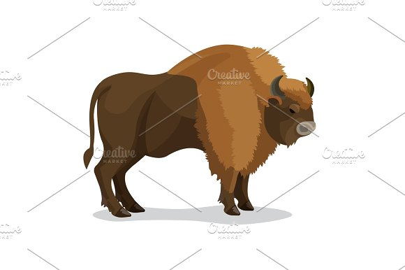 Aurochs Animal In Brown Colour With Horns Isolated On White