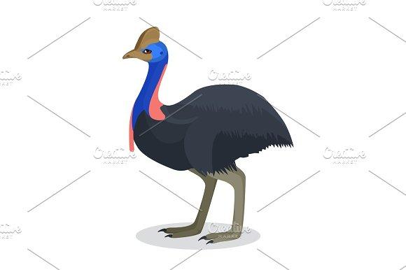 Full Length Portrait Of Australian Black Ostrich Isolated On White