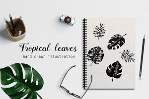 Tropical leaves. Hand drawn vectors.