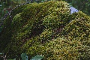 Stone with lichen. Scotland