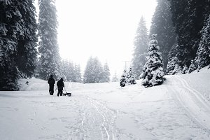Winter forest and mountains