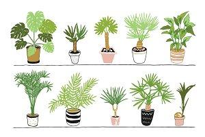Home Palms
