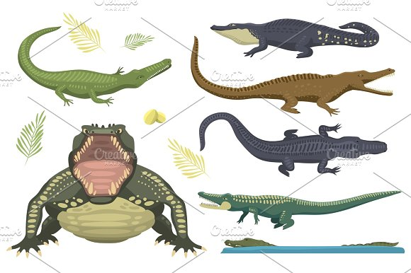 Cartoon Green Crocodile Danger Predator And Australian Wildlife River Reptile Carnivore Alligator With Scales Teeth Flat Vector Illustration