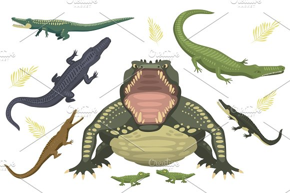 Cartoon Green Crocodile Danger Predator And Australian Wildlife River Reptile Carnivore Alligator With Scales Teeth Flat Vector Illustration