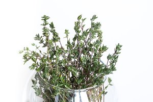 Bouqet of fresh green thyme in vase