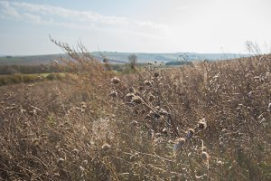 Dry plants at summer Meadow - russian rural landscape