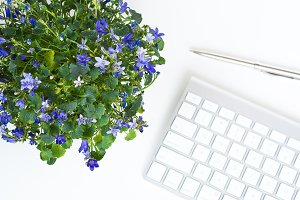 Feminine desktop with campanula