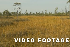 Golden field in the wildlife reserve. Autumn daytime. Smooth dolly shot