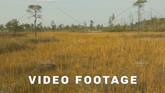 Golden Field In The Wildlife Reserve Autumn Daytime Smooth Dolly Shot