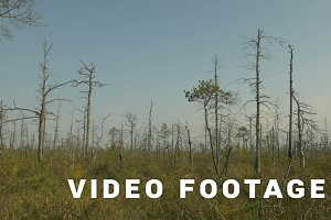 Dried trees in the forest. Autumn daytime. Smooth dolly shot