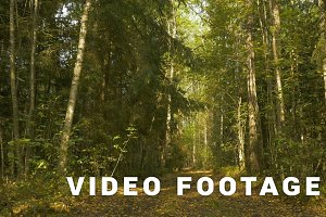 Walkway in the forest. Autumn daytime. Smooth middle dolly shot