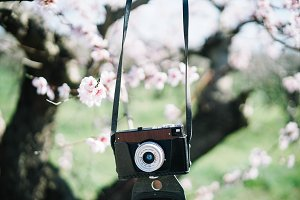 photo camera retro in the garden