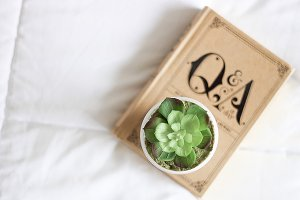 Succulent On Book